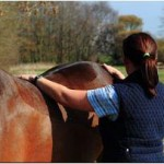 Blog_equine_physio_