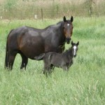 Blog_minimising harm to young horses
