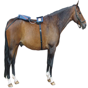horse_with_powerpad-e1522726170526