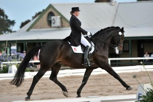 Blog_Getting the most out of professional equine therapy