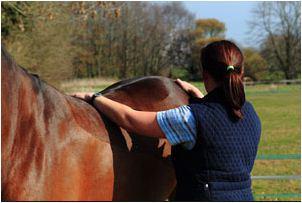 Blog equine physio