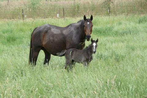 Blog minimising harm to young horses