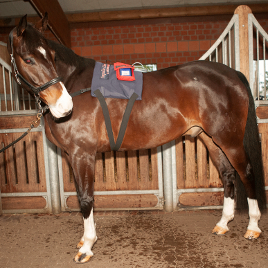activo-med-equine-power-pads-l-animal-therapeutics