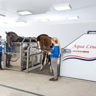 horse in equine spa