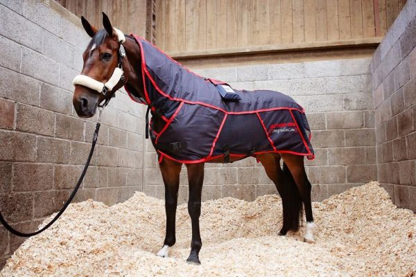 Activo-Med horse massage rug on a cold backed horse