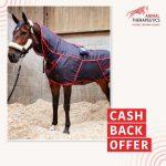 Cash Back Offer Graphic for Blog