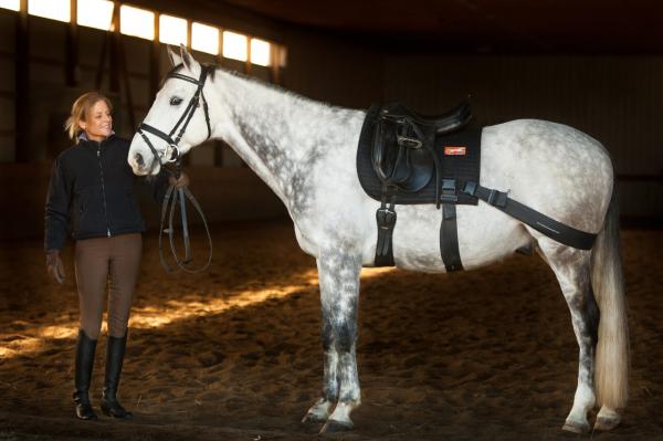 euiband training system on horse