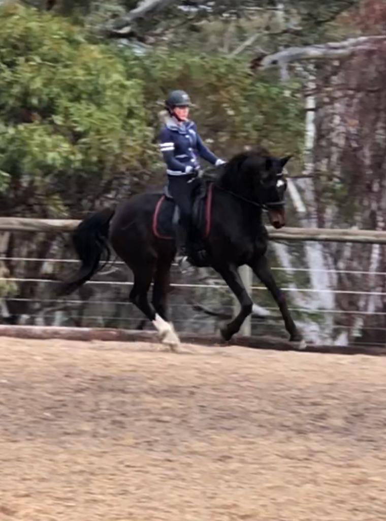 Warrington Park Renegade under saddle