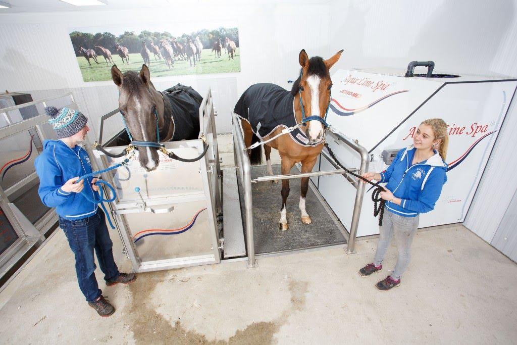 Activo-Med Horse Treadmill