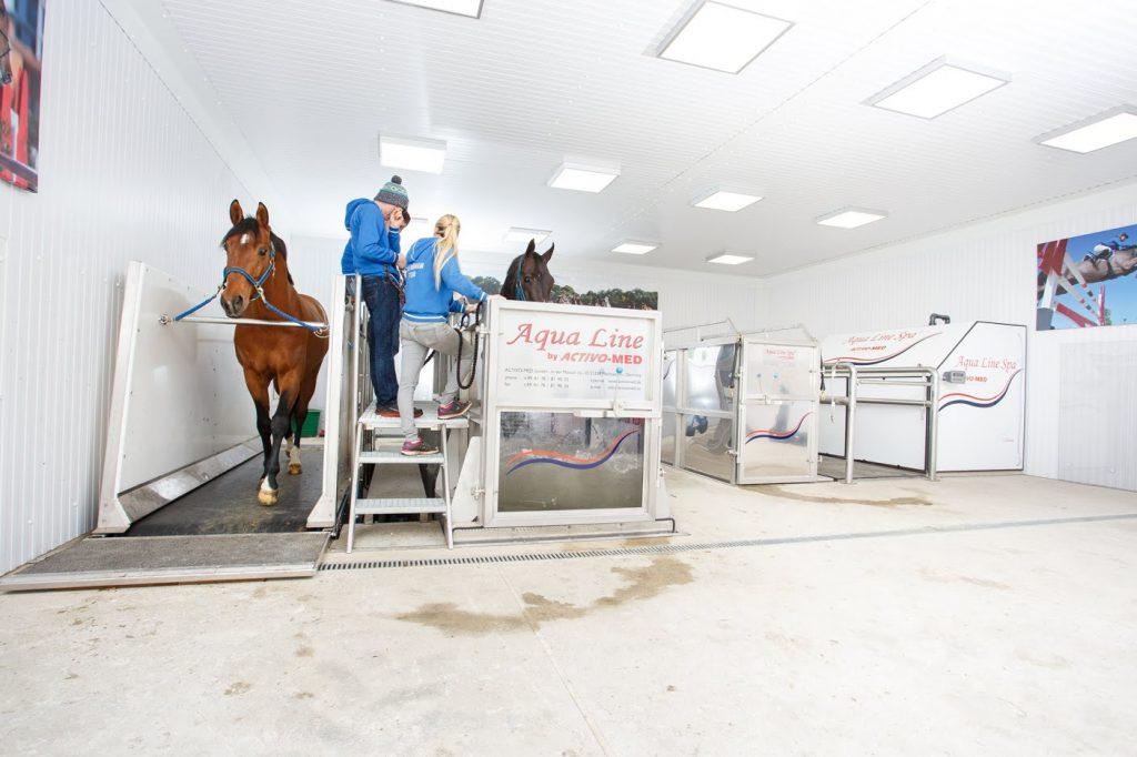 horse on a treadmill