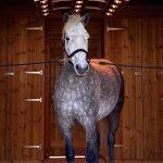 Horse using a Solarium