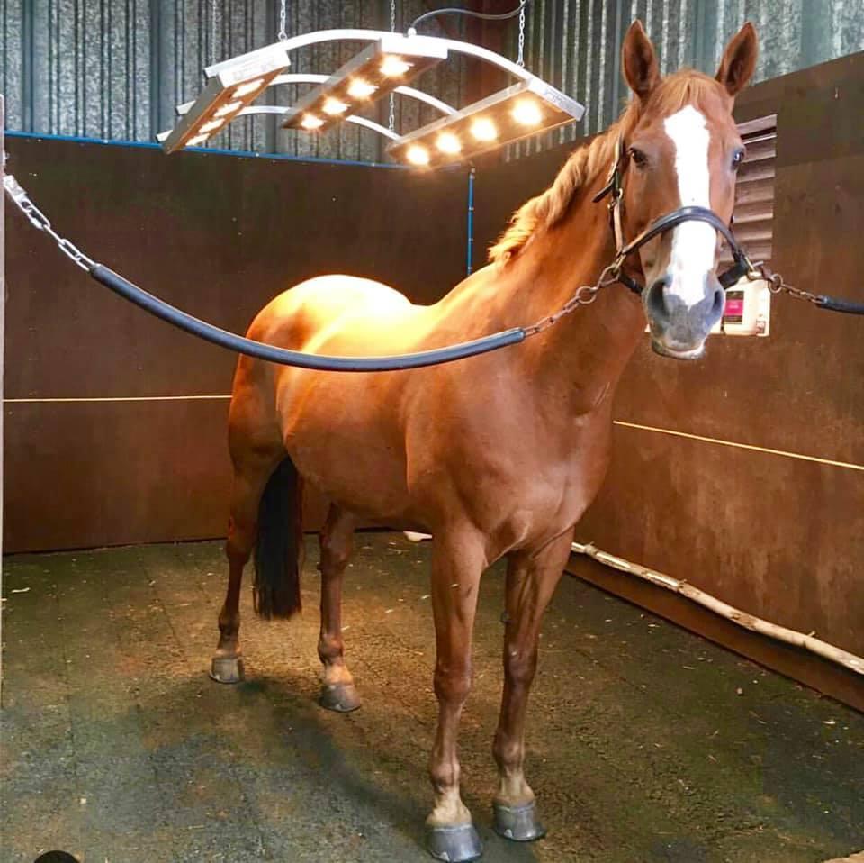 horse standing under Drimme Solarium