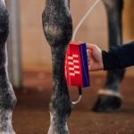 Red Light Therapy in horses